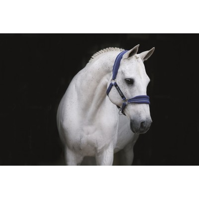 Licou Rambo royal cheval