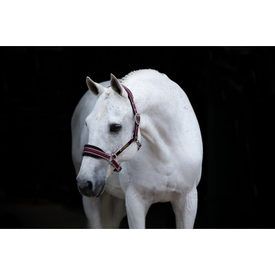 Licou Rambo bourgogne cheval