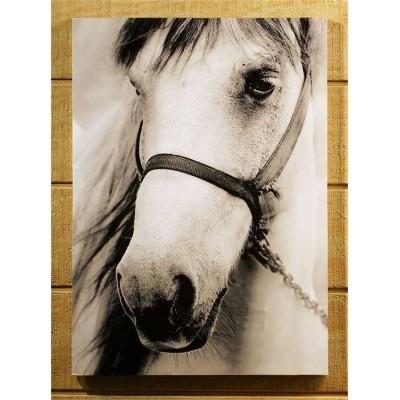 Toile cheval 20 X 27