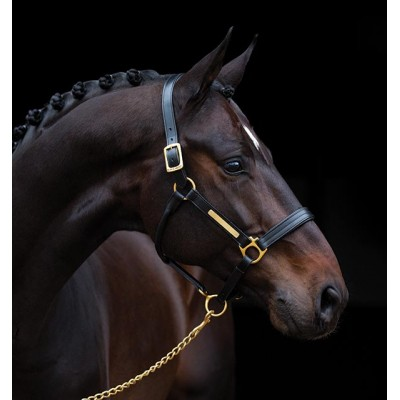 Licou de cuir Amigo cheval